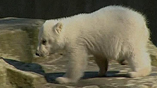 Autoimmun betegség okozhatta Knut halálát