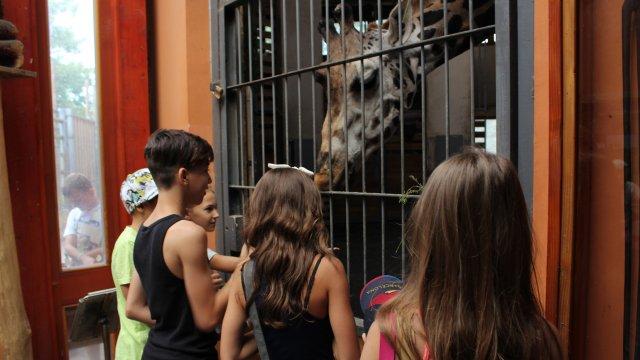 A Kicsi Óriások ellátogattak az állatkertbe!